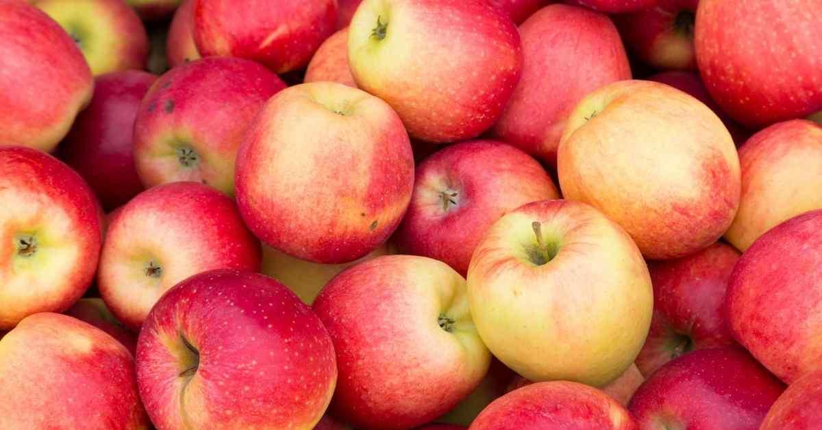 りんご ダイエット