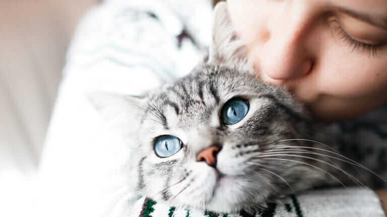 猫 舐める ストレス