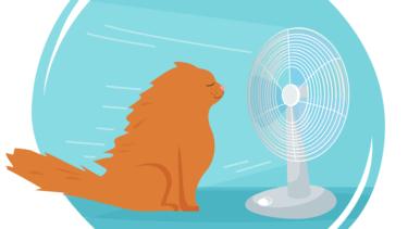 猫に扇風機は実は危ない!扇風機を使うときは注意!