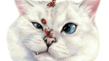 猫が虫を持ってくる|食べることもあるので注意!寄生虫も