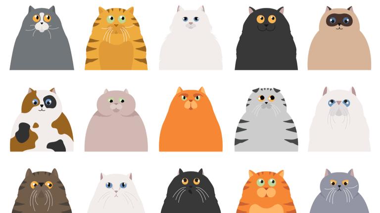 猫 賃貸 壁対策