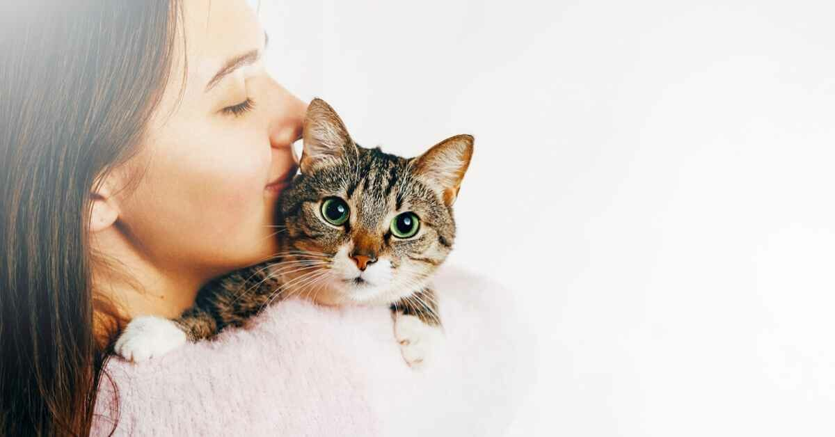 猫が抱っこ