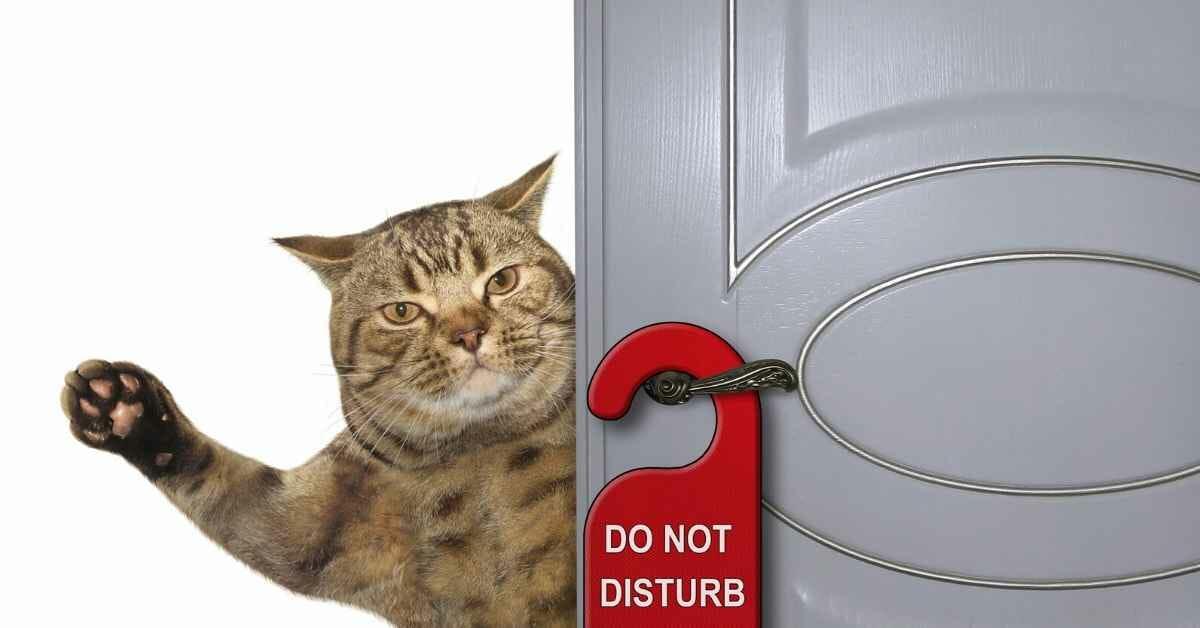 猫 ペットホテルがストレス (1)