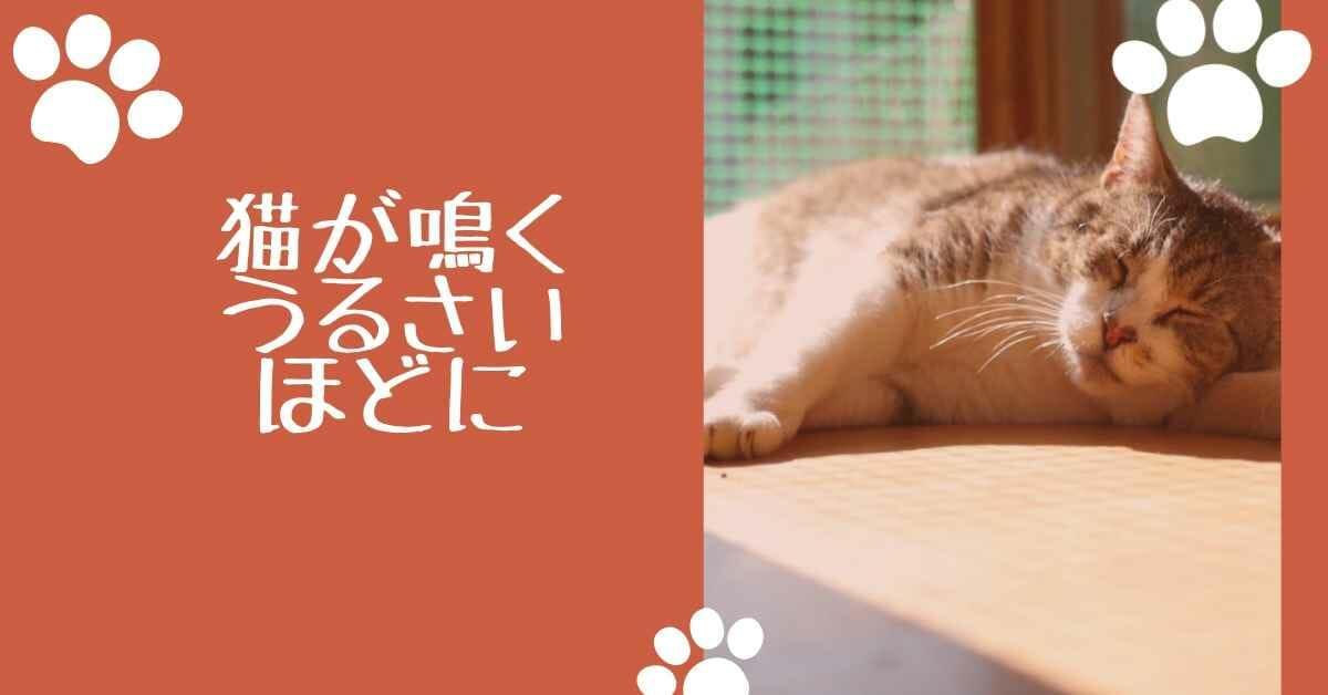 猫 鳴く (3)