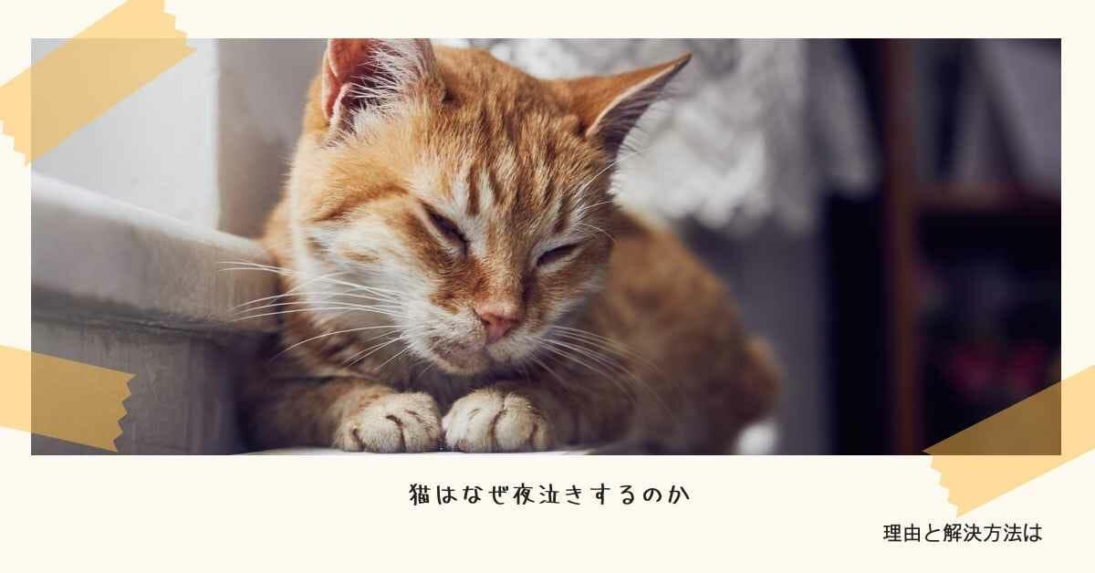 猫 夜泣き