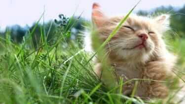 猫の死因上位!愛猫が腎臓病になってしまったら
