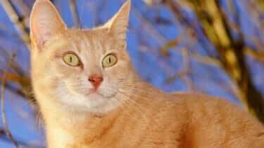 メス猫の性格はマイペースでツンデレ!抱っこはご飯の時だけ許す!?