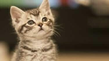 猫にマーキングをやめさせるには?コツを伝授!効果のある消臭剤も