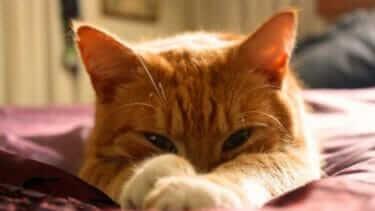猫の腕枕が毎日重い|寝るとき最近のマイブームか?猫の腕枕