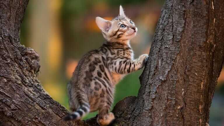 猫 雄 去勢 メリット