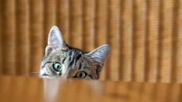 猫 健康診断 尿検査