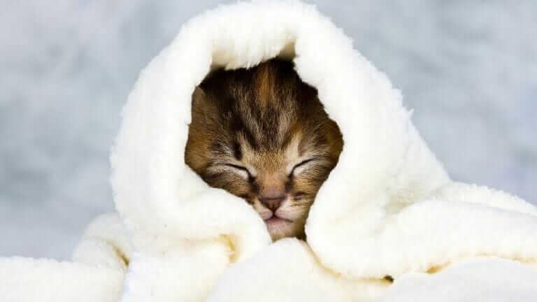 猫ライオンカットやり方