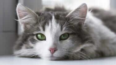 猫は冷房が苦手?暑さ対策はどうするべき?