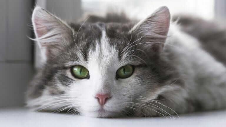 猫 冷房 苦手