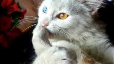 猫との共同生活|注意すべき事がたくさんある|徹底解明