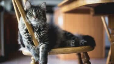 猫と長距離引っ越し!ご飯を食べない・トイレのことが心配|業者に依頼もあり
