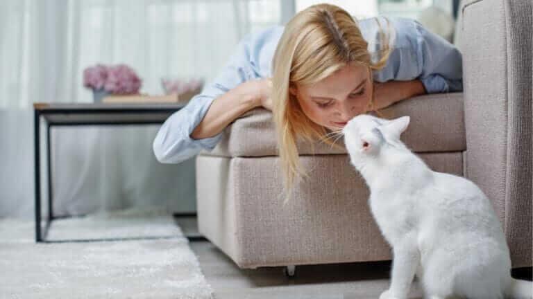 猫 優しい