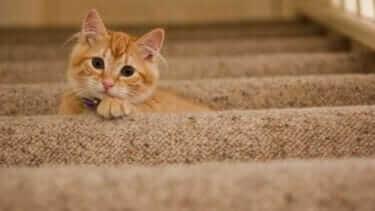 猫 べったりくっついてくる