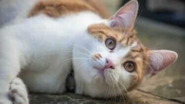 猫が病院を怖がる!ストレスで暴れる時  持ち物はネット?