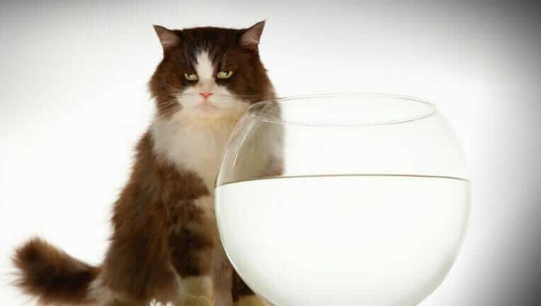 猫 ピュアクリスタル