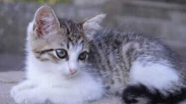 猫が喜ぶ撫で方・遊び方|知っておくと仲良くなれる!