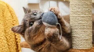 猫のひげを切るとどうなる?切ってはいけないって本当?
