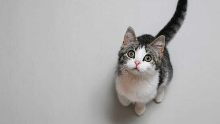 猫がついてくる