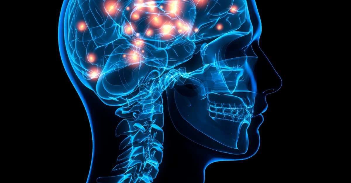 脳が活性化する