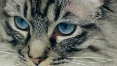 猫の目の病気|瞬膜の状態から考えられるのは!