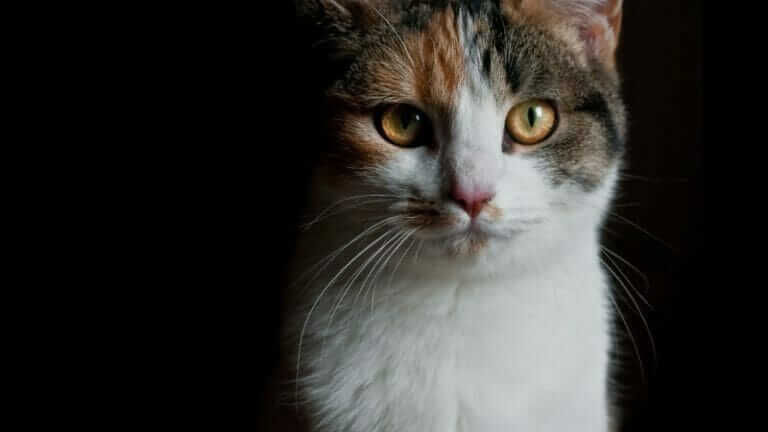 猫 ベランダ 危ない