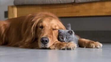 チュールに猫が夢中になる!その理由と与え方をご紹介!