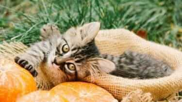 猫の去勢時期はいつなの?その理由や事例は?
