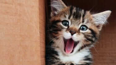 猫がドライヤーを怖がる!上手に乾かすコツは?