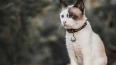 猫が食べない・元気ない・吐く|成猫が36時間食べないなら病院へ