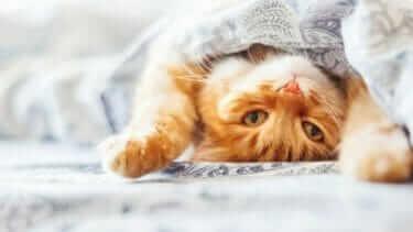 猫を洗う必要がある?お風呂嫌いの猫を洗う方法は?