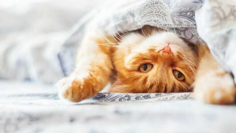 猫 洗う必要がある?