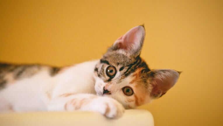 猫の妊娠期間