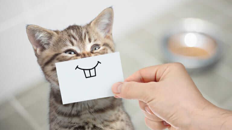 猫 さかり