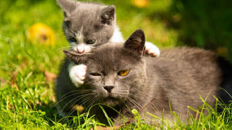 猫 2匹目 性別