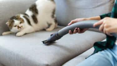 猫は掃除機が嫌い!コードレスなどのおすすめは?