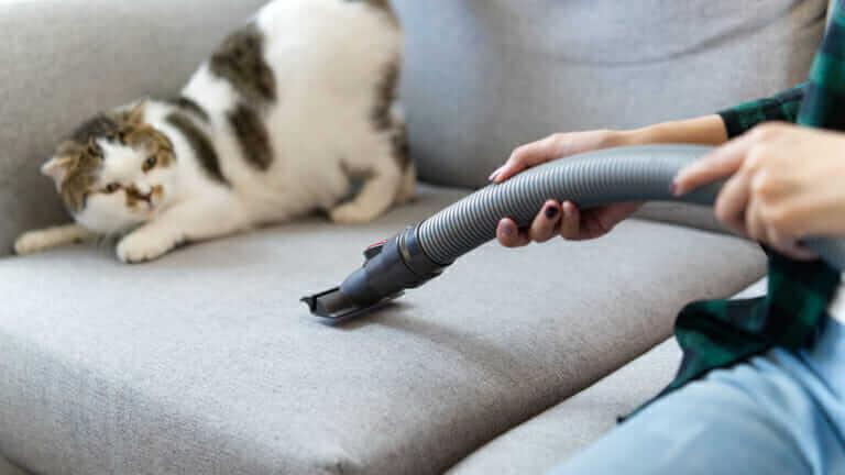 猫 掃除機 怖がる