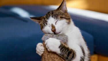 猫に毛布は危険!異食症(噛む・食べる・舐める)になるかも?