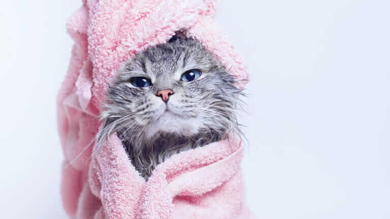 猫 吐く 毎日 元気