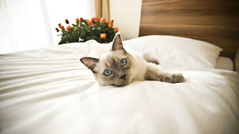 猫 ペットホテル ストレス
