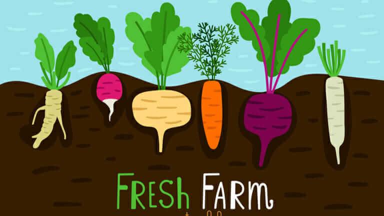 家庭菜園 土作り 時期 大根の育て方