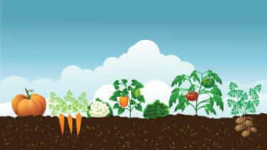 家庭菜園の土作り〜時期|各種野菜の育て方・まとめ|農家が教える