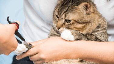 猫の爪切りのちょうどいい頻度はどのくらい?放っておくとどうなる?