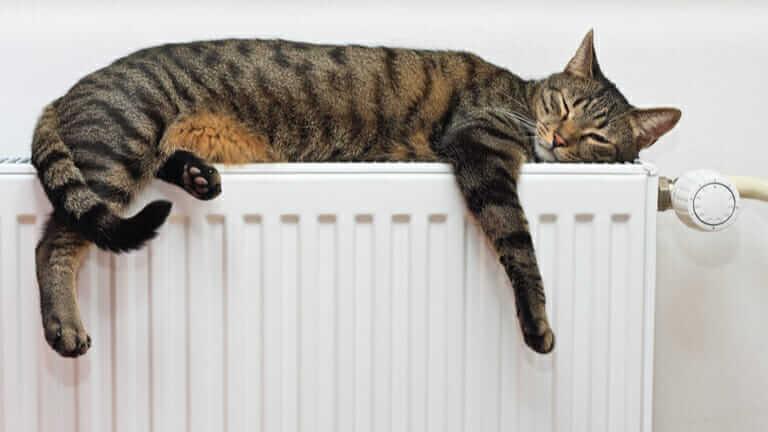 猫 運動不足 便秘