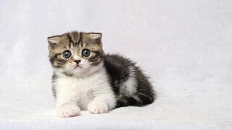 猫 ケージ 必要ない