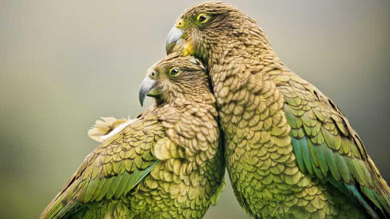 ニュージーランド 鳥